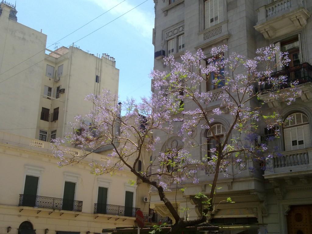 ... überall in der Stadt blühen diese herrlichen Bäume, noch sind sie namenlos...